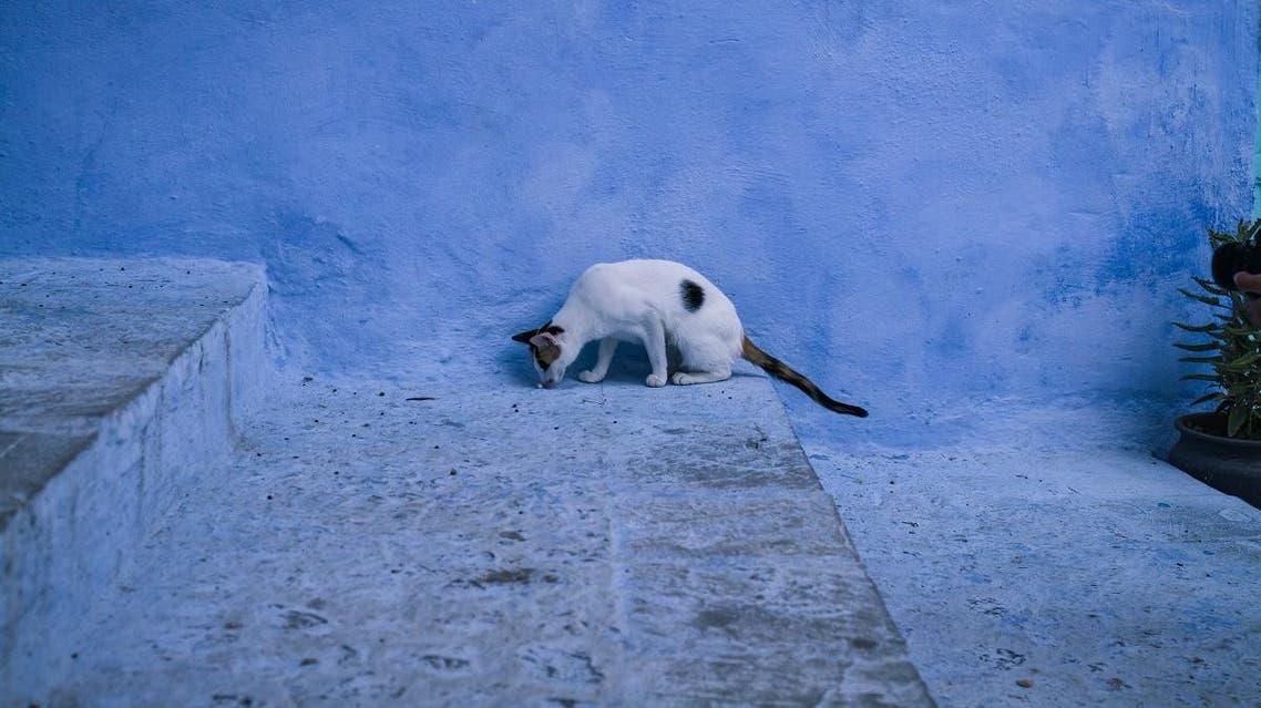 Morocco cat rabies shutterstock
