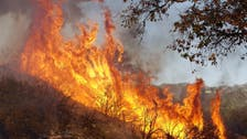 500 firefighters battle forest fire in central Portugal