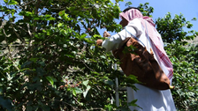 IN PICTURES: Find out how this Saudi province in Jazan celebrates coffee trees