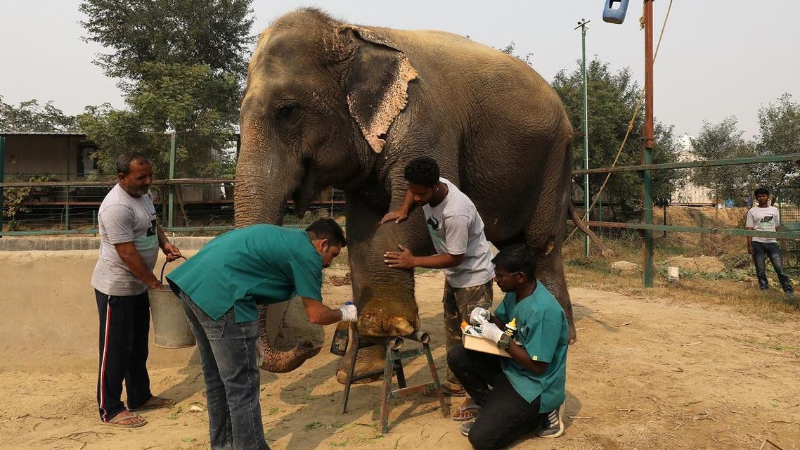 India elephant hospital. (Reuters)
