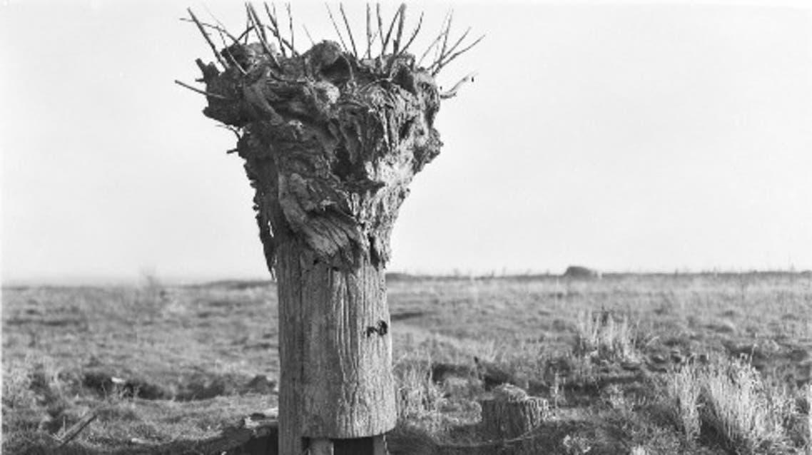 صورة لإحدى أشجار المراقبة خلال الحرب العاليمة الأولى