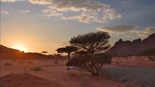 Saudi PIF reveals 'Wadi Al Disah' project in Mohammed bin Salman Natural Reserve