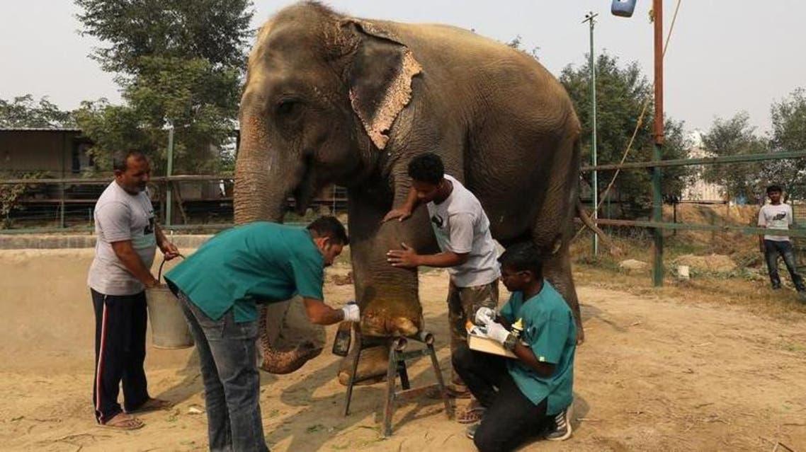 Elephant hospotal
