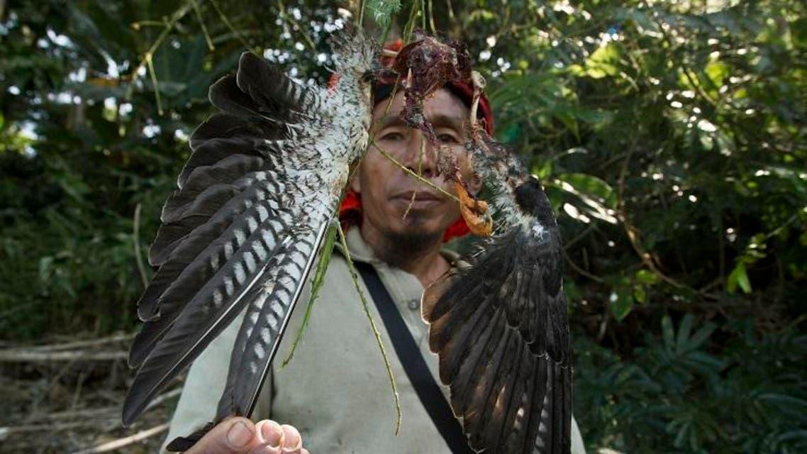 Northeastern India falcon hunters turn protectors