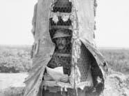 كيف استُخدِمت الأشجار للقتل والتجسس خلال الحرب الكبرى؟