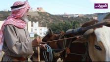 """ٹکنالوجی کے دور میں """"بیلوں"""" سے کاشت کاری کرنے والا سعودی کسان"""