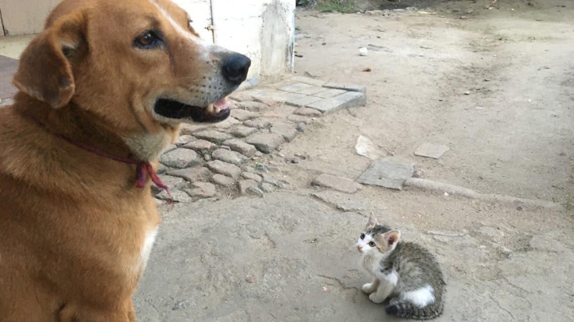 كلاب و قطط