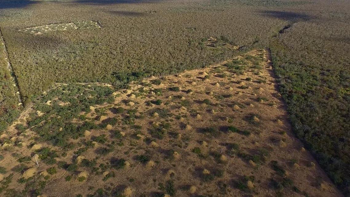 deforestation in Brazil. (AFP)