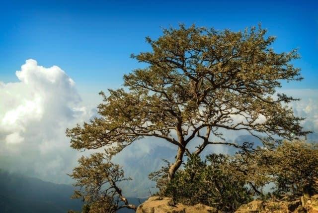 Saudi Assir mountains 4 (Asmaa Abu Qamr)