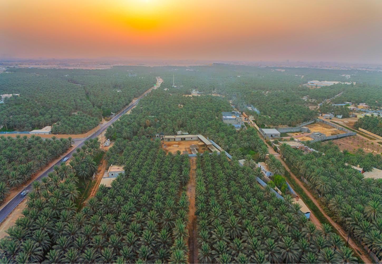 Saudi Ahsa region 3 (Abdullah al-Sheikh)