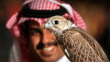 Falconers flock to Riyadh to celebrate ancient sport