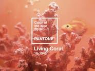 """دليل ألوان """"بانتون"""" يختار المرجاني الحيوي لعام 2019"""