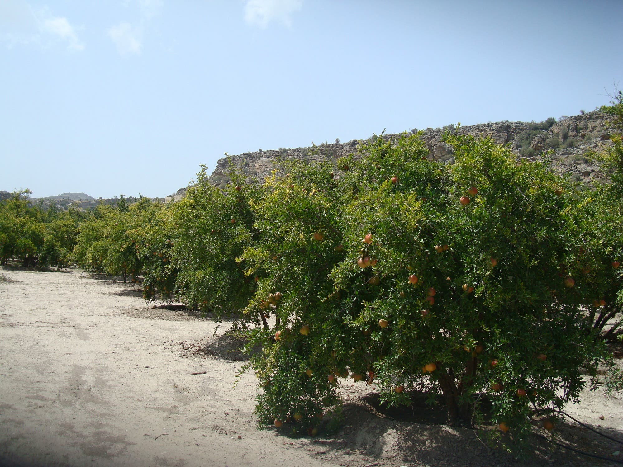 The farm of the Ministry of Agriculture is reputed to have the best varieties of the fruits and vegetables. (Supplied)