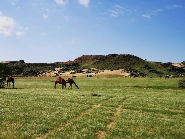 فيديو وصور.. هكذا تحولت جبال مكة إلى واحة خضراء