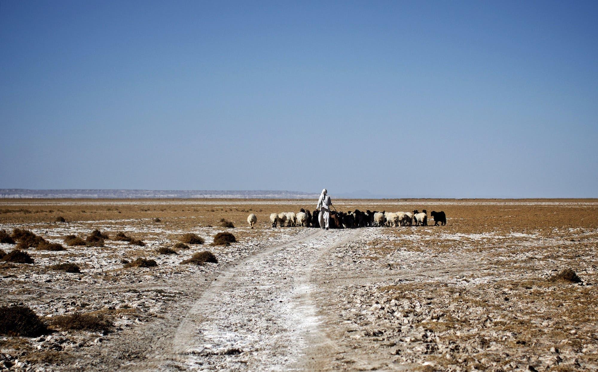 An Iranian shepherd walks his herd in the middle of Hamoon wetland near the Zabol town, in Iran on February 2, 2015. (AFP)