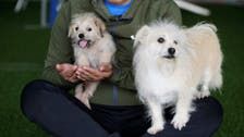 خدمة استنساخ تجارية في الصين.. والزبون الأول كلب مشهور