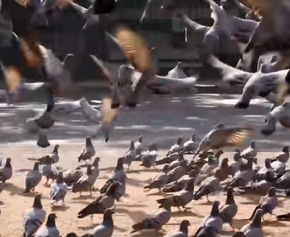 Hussain's children help him feed the birds. (Screengrab)