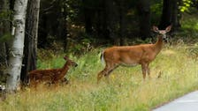 US judge sentences poacher to repeatedly watch Disney classic 'Bambi'