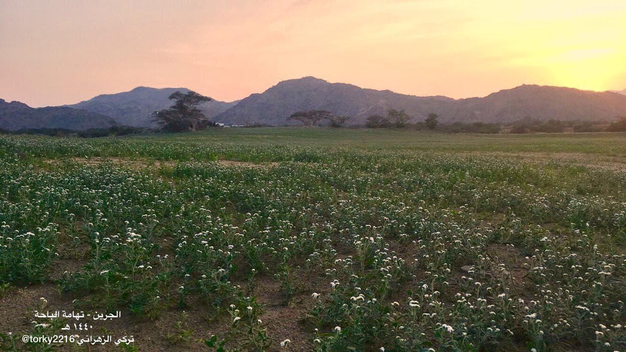 Saudi flowers in the desert. (Supplied)