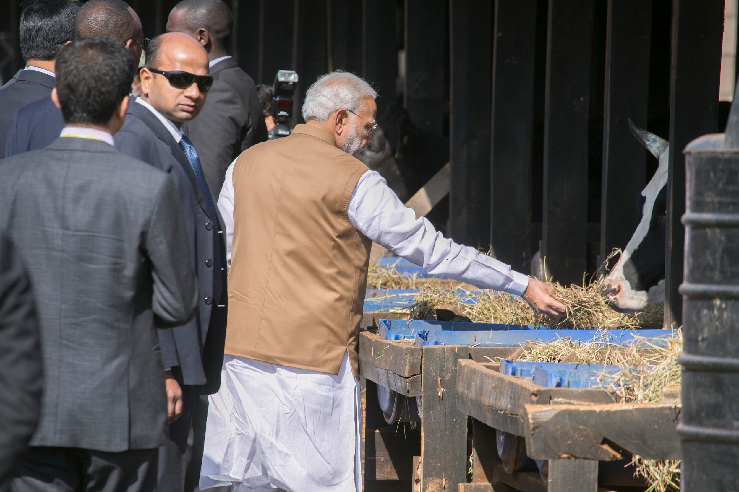 Prime Minister Modi feeds a cow as he visits the residents of Rweru in Bugesera District of Rwanda on July 24 ,2014. Modi gifted some cows to residents of Mweru, to support President Paul Kagame's initiative to reduce poverty and childhood malnutrition in Rwanda. (AP)