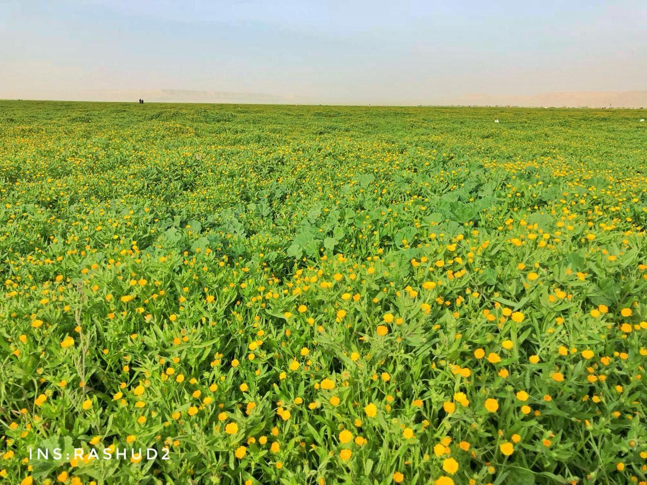 khofos meadows