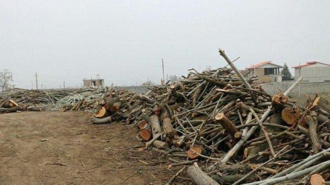 موج اعتراض به قطع درختان 200 ساله ارسباران در آذربایجان شرقی