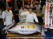 فقط في اليابان.. بيع سمكة تونة بـ3 ملايين دولار