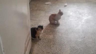 قطط تطيح بمدير مستشفى في مصر.. صور تكشف التفاصيل