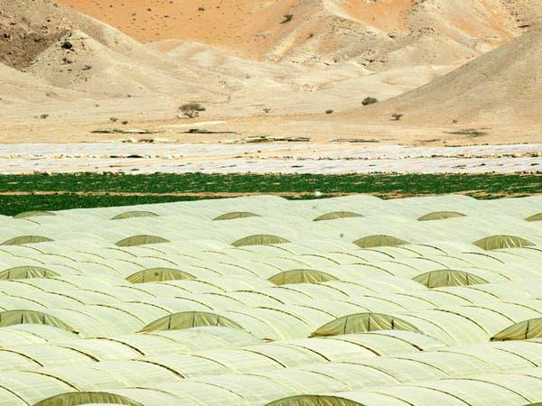 تبوك الزراعية توافق على تخفيض رأس المال بنسبة 46%