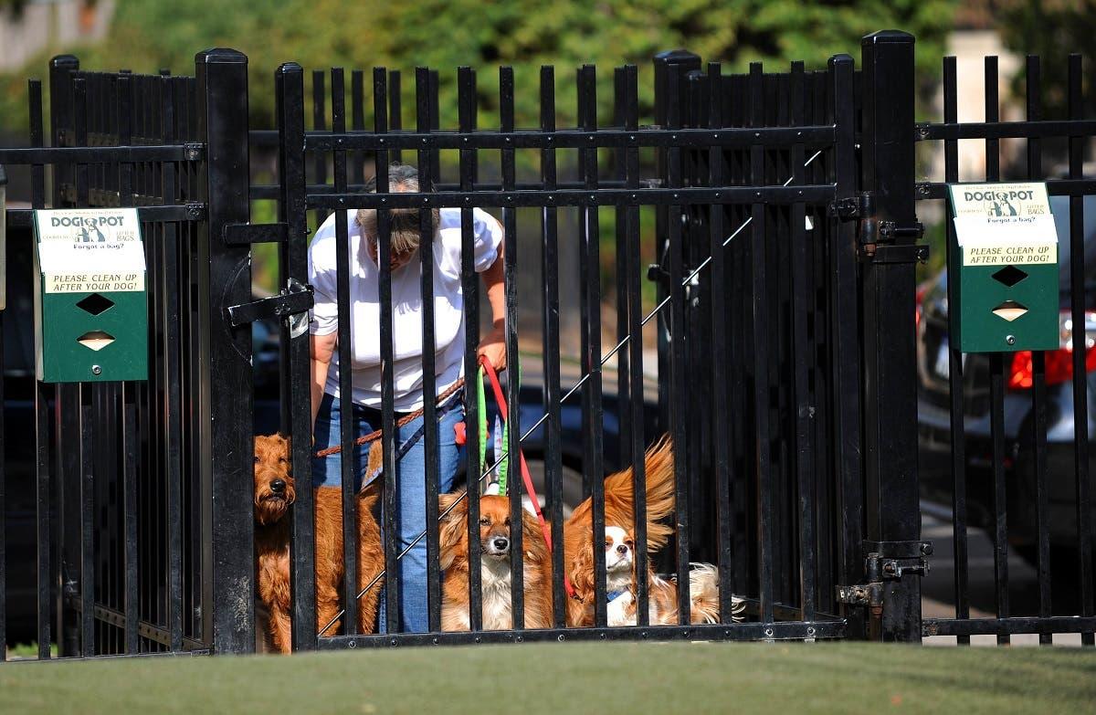 Dog walker Washington DC. (AFP)