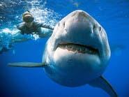شاهد سمكة قرش عملاقة تسبح مع غواصين وتمضي اليوم معهم