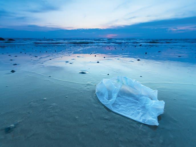 حفيد عالم شهير: لم يفت الأوان لإنقاذ المحيطات