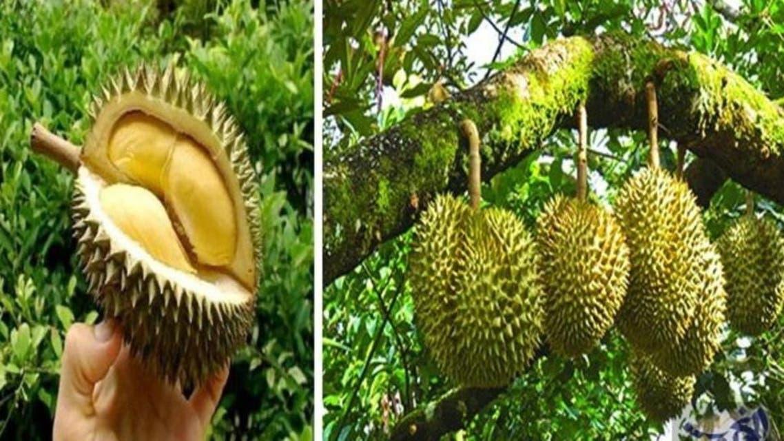 انڈونیشیا پھل