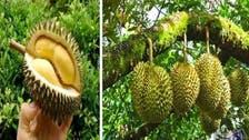 انڈونیشیا: انتہائی ناپسندیدہ بُو والا پھل بھاری قیمت میں فروخت