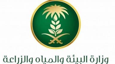 """السعودية.. السماح بالتمويل الحكومي للزراعة في """"الدرع العربي"""""""