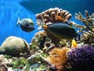 علماء يكشفون كيف تستطيع بعض الأسماك تغيير جنسها!