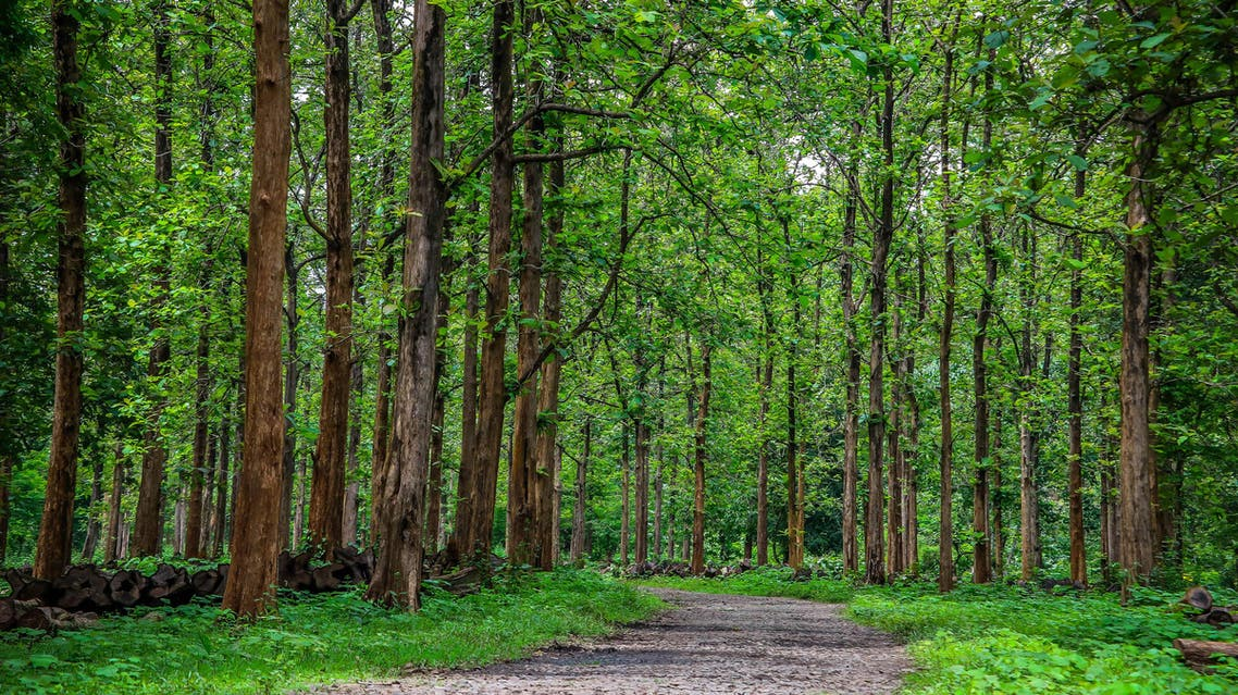 The rapid felling threatens worsening erosion and environmental damage in the country. (Shutterstock)