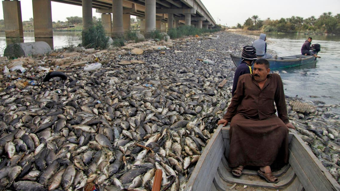 Iraqi men sail past scores of dead fish floating on the Euphrates near the town of Sadat al-Hindiya on November 2, 2018. (AFP)