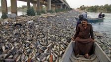UN probe finds herpes virus killed millions of Iraqi carp