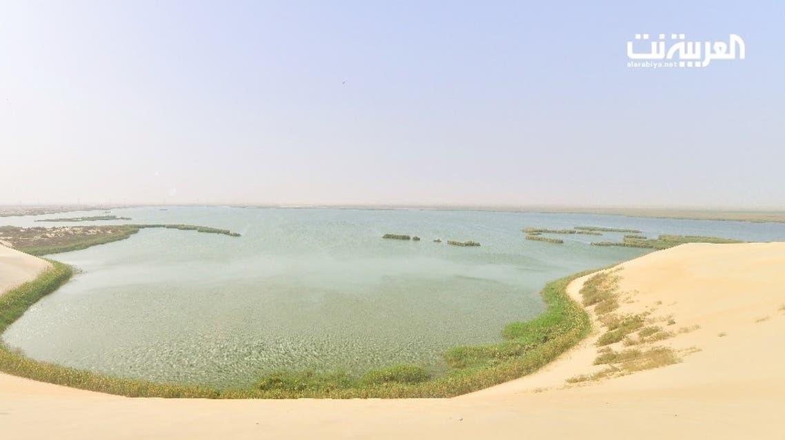 تحويل بحيرة الأصفر في الأحساء إلي محمية طبيعية