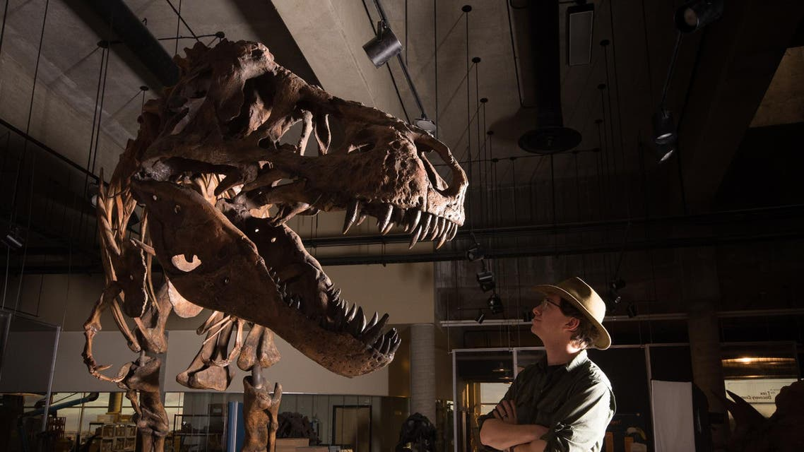 """This undated handout photo released by the University of Alberta shows Dr W. Scott Persons looking at the skeleton of the Tyrannosaurus rex """"Scotty"""" at the T.rex Discovery Centre in Eastend, Canada (AFP)"""