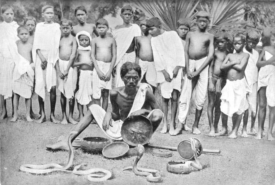 هكذا خدع الهنود بريطانيا وكسبوا ثروة وظهر تأثير الكوبرا 08ef73b0-7098-48f3-8418-4fe18816a099
