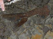 بالصور.. حفريات أسماك نفقت قبل 66 مليون سنة
