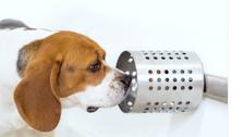 دراسة مثيرة عن قدرة الكلاب كشف السرطان بالدم بدقة 97%