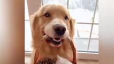 شاهد.. صداقة مميزة بين كلب وقطط حديثة الولادة