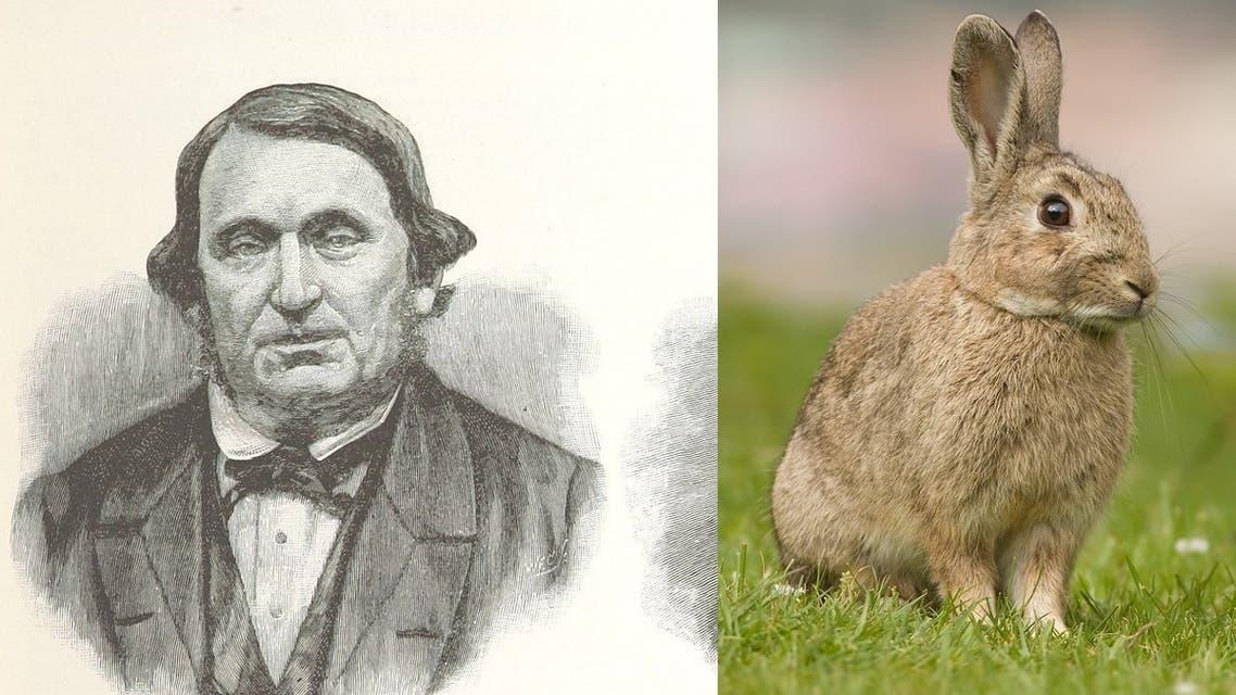 توماس أوستن استورد 24 أرنبا بريا من إنجلترا وأطلق سراحها باستراليا