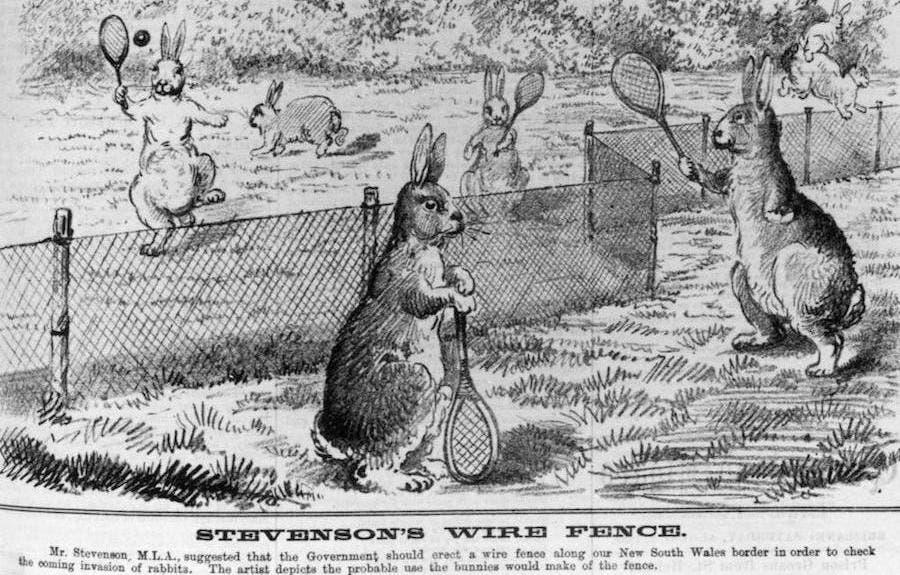 رسم كاريكاتيري يجسد فشل الأسلاك الشائكة في انهاء أزمة آفة الأرانب