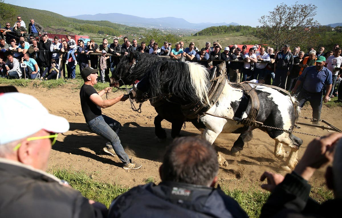 "A competitor pushes his horses during ""Straparijada"". (Reuters)"
