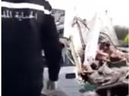 تونس: مصرع 12 شخصا بينهم 7 عاملات بالحقول في حادث سير