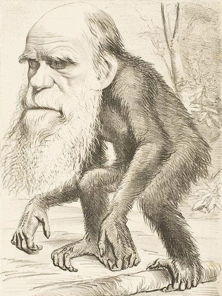 رسم كاريكاتيري ساخر لشارل داروين عقب وضعه لنظرية التطور